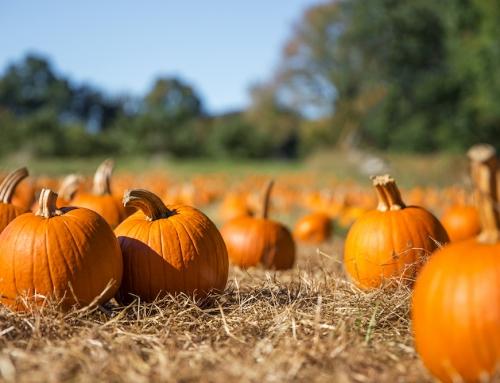 Fall Festival – October 30